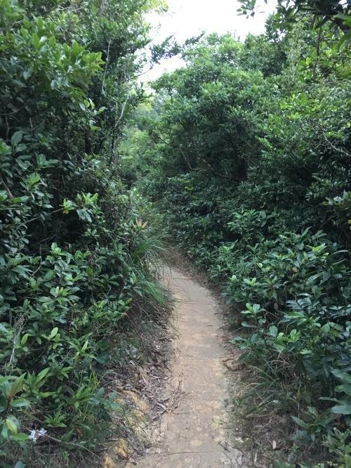 footpath1